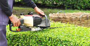 Garden Maintenance Southend, Essex